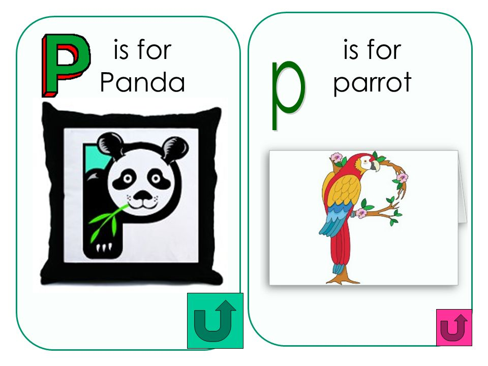 is for Panda is for parrot p
