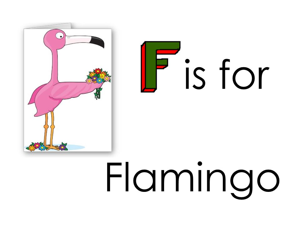 is for Flamingo