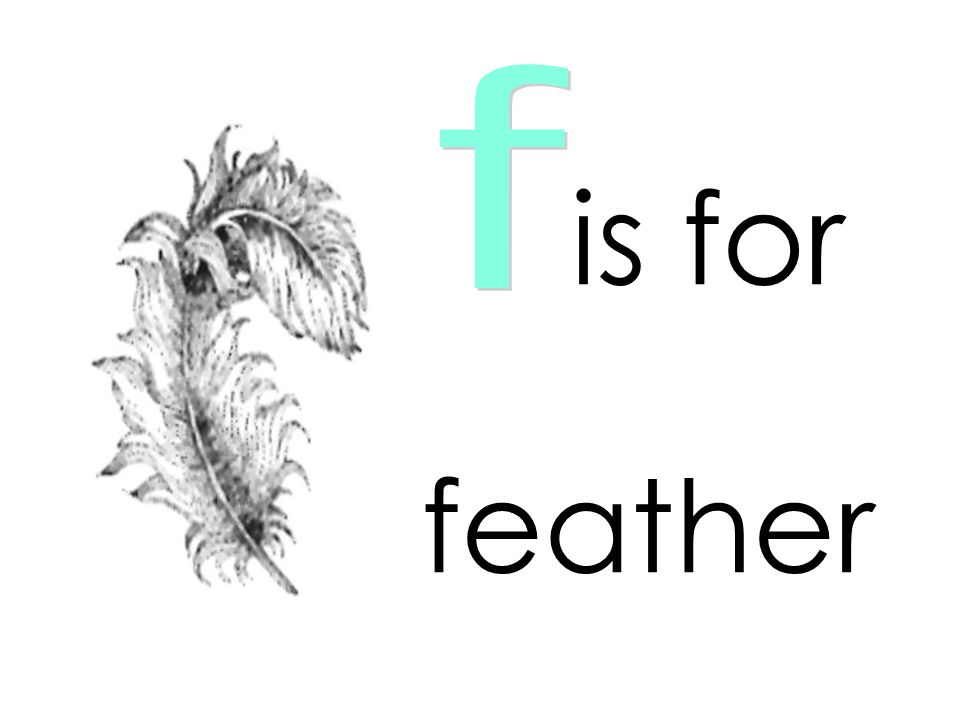 f is for feather