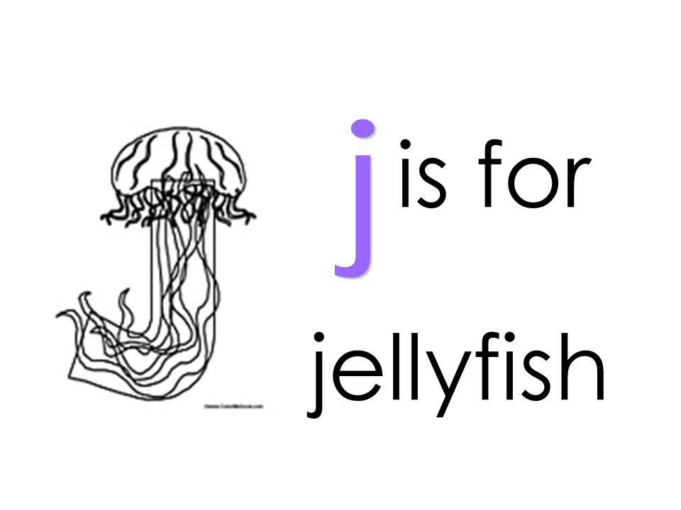 is for j jellyfish