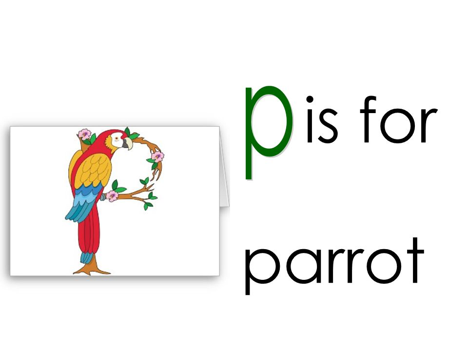 is for p parrot