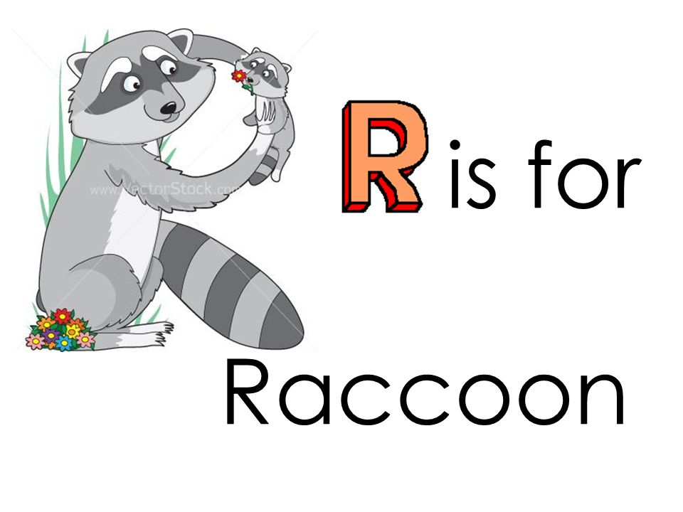 is for Raccoon