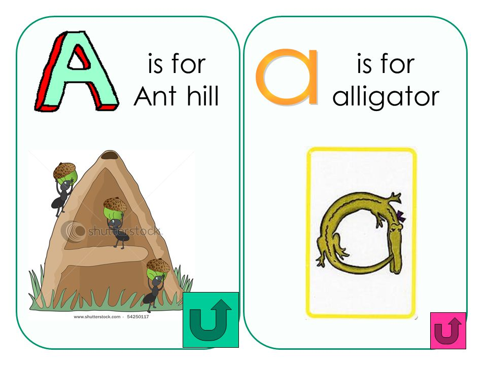 is for Ant hill is for alligator a