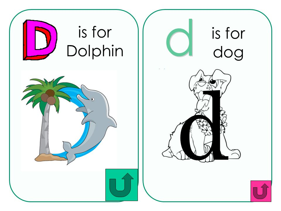 is for Dolphin is for dog d d