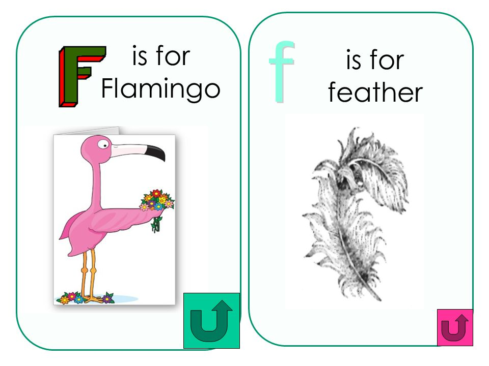 is for feather is for Flamingo f