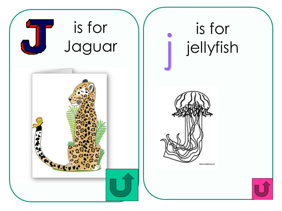 is for Jaguar is for jellyfish j