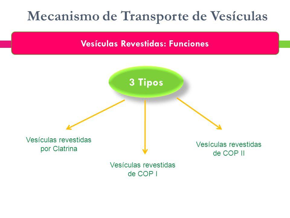 Mecanismo de Transporte de Vesículas