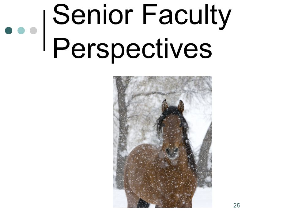 Senior Faculty Perspectives