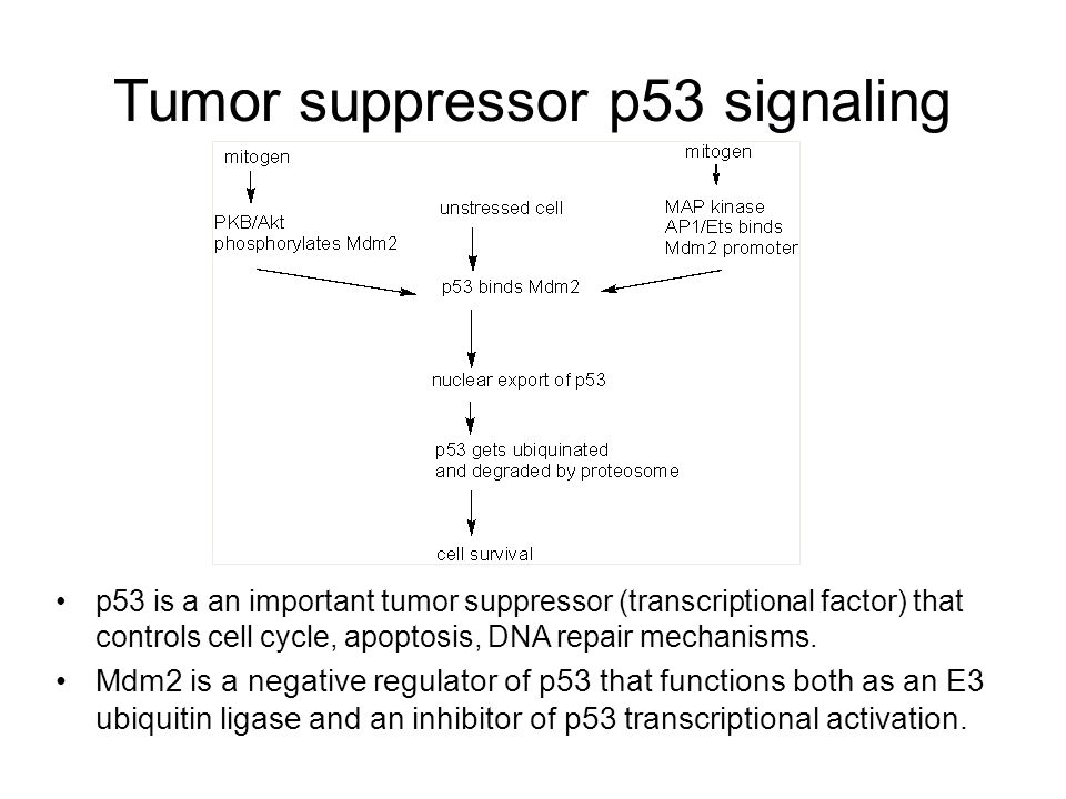 Tumor suppressor p53 signaling
