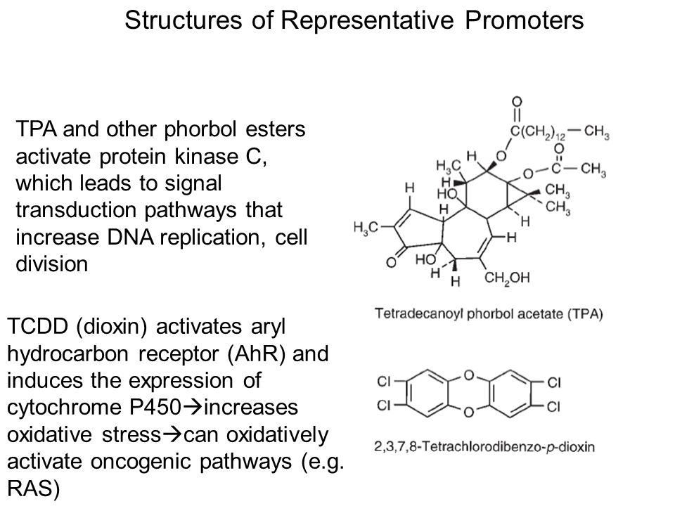 Structures of Representative Promoters