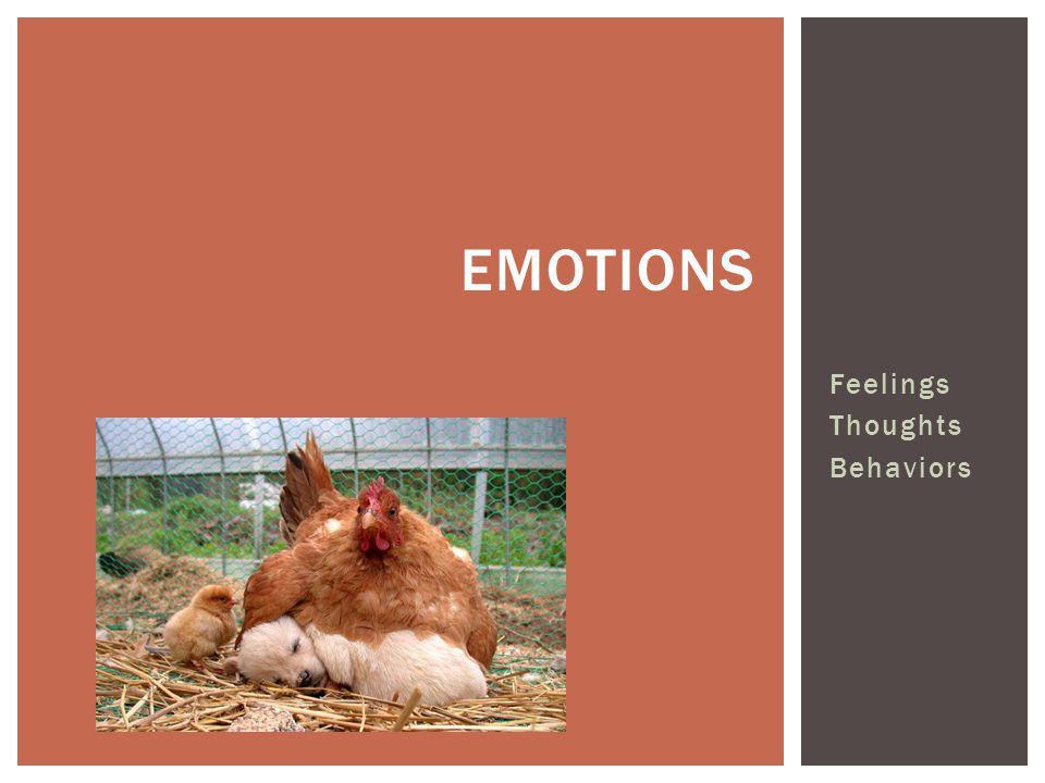 Emotions Feelings Thoughts Behaviors