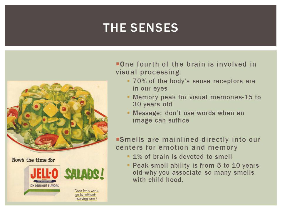 The senses One fourth of the brain is involved in visual processing