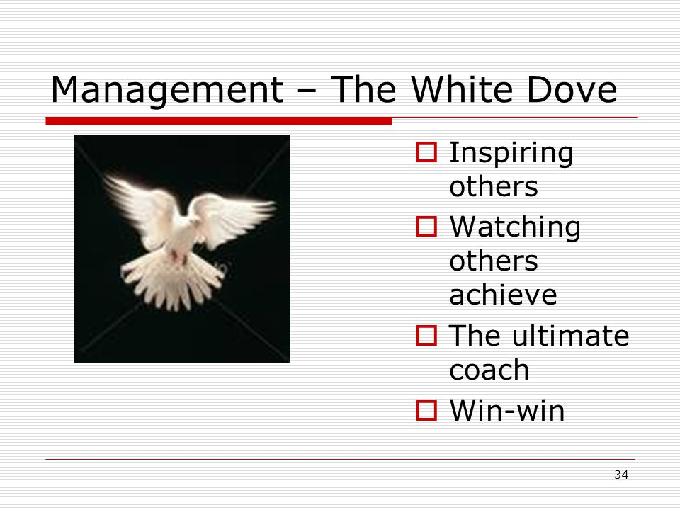 Management – The White Dove