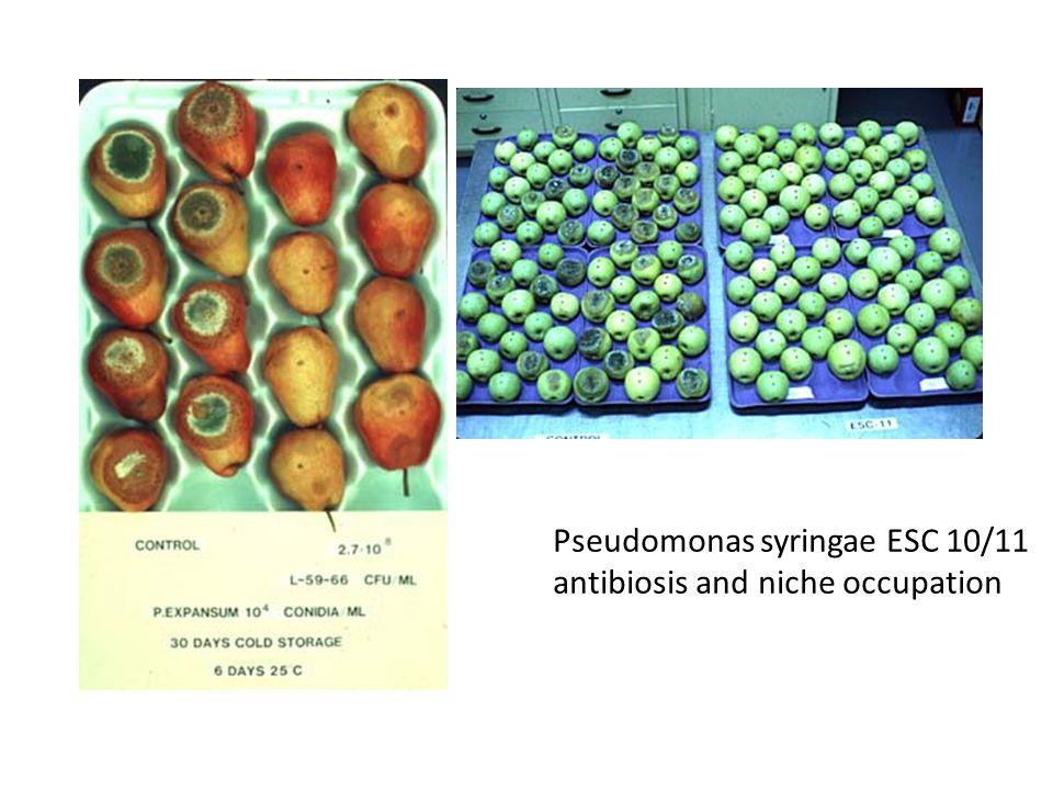Pseudomonas syringae ESC 10/11