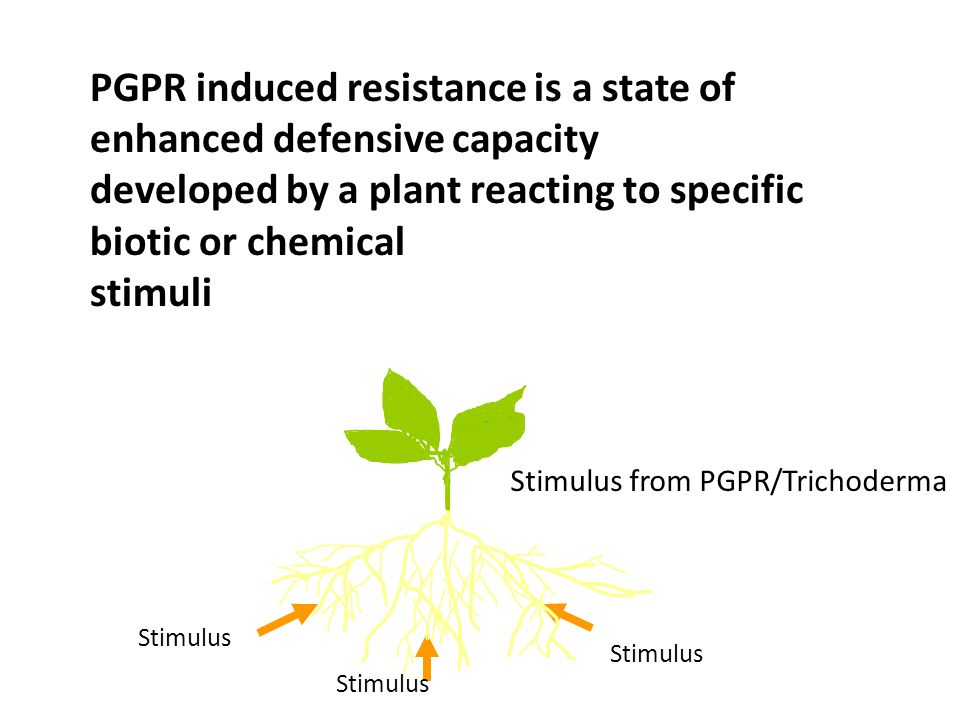 PGPR induced resistance is a state of enhanced defensive capacity