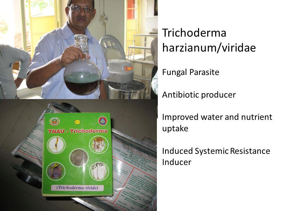 Trichoderma harzianum/viridae