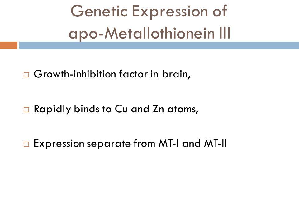 Genetic Expression of apo-Metallothionein III
