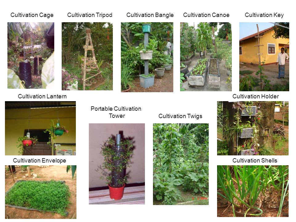Cultivation Cage Cultivation Tripod. Cultivation Bangle. Cultivation Canoe. Cultivation Key. Cultivation Lantern.