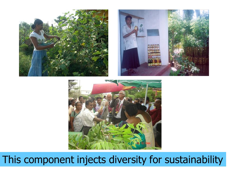 This component injects diversity for sustainability