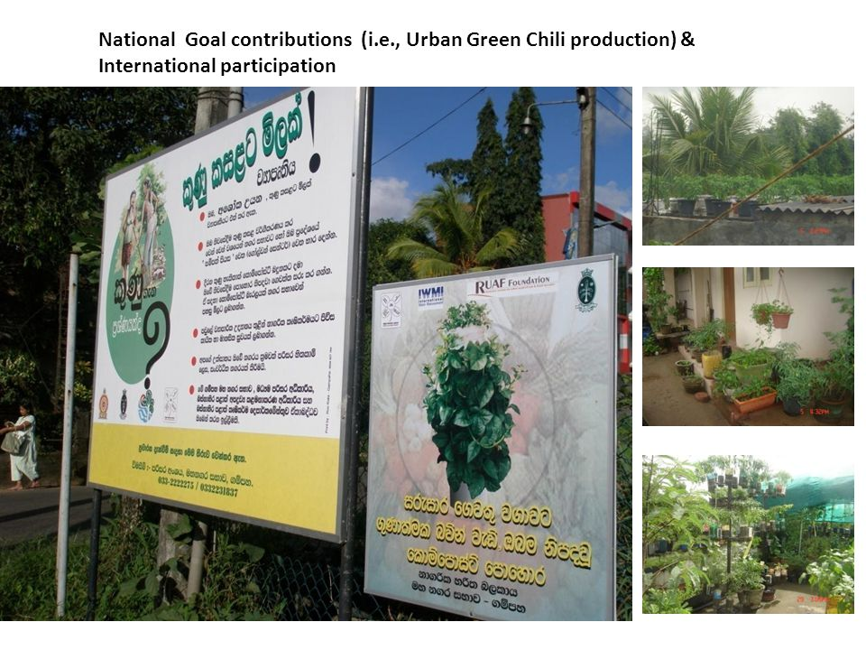 National Goal contributions (i.e., Urban Green Chili production) &