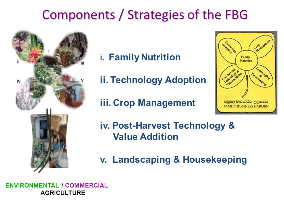 Components / Strategies of the FBG