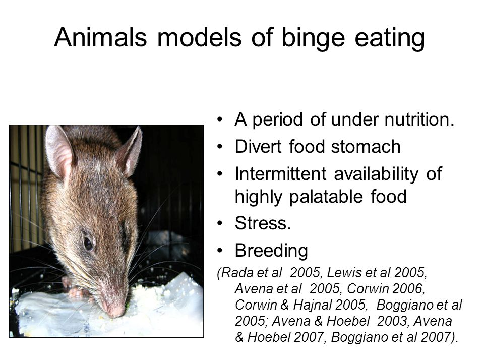 Animals models of binge eating