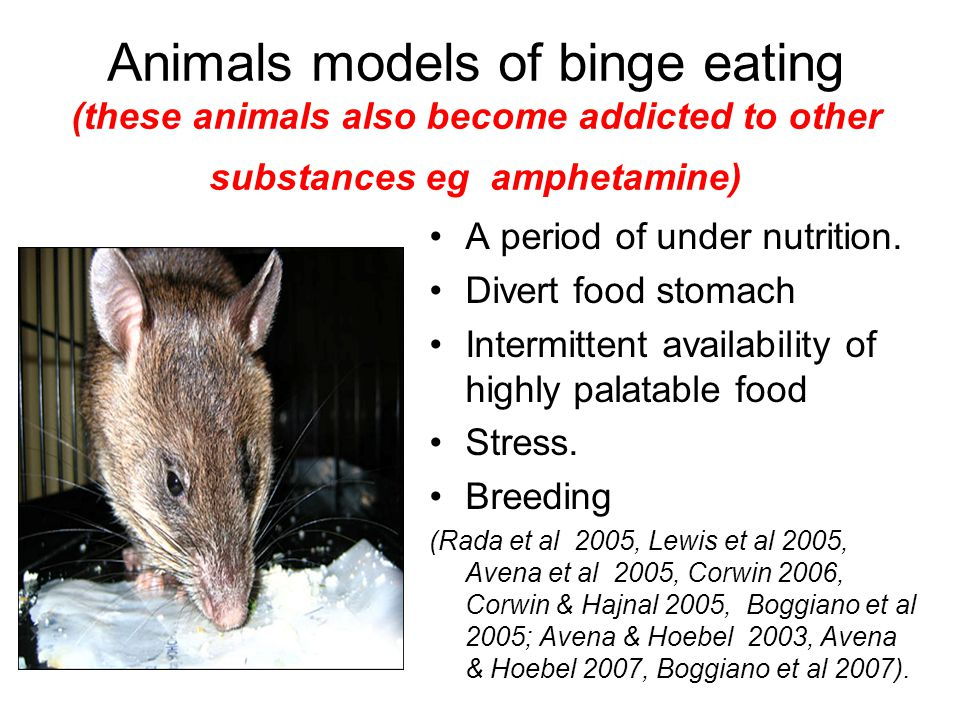 Animals models of binge eating (these animals also become addicted to other substances eg amphetamine)