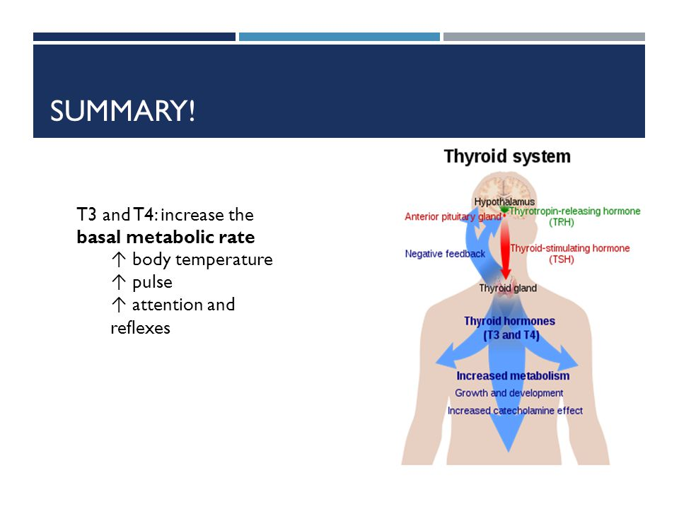 Summary! T3 and T4: increase the basal metabolic rate