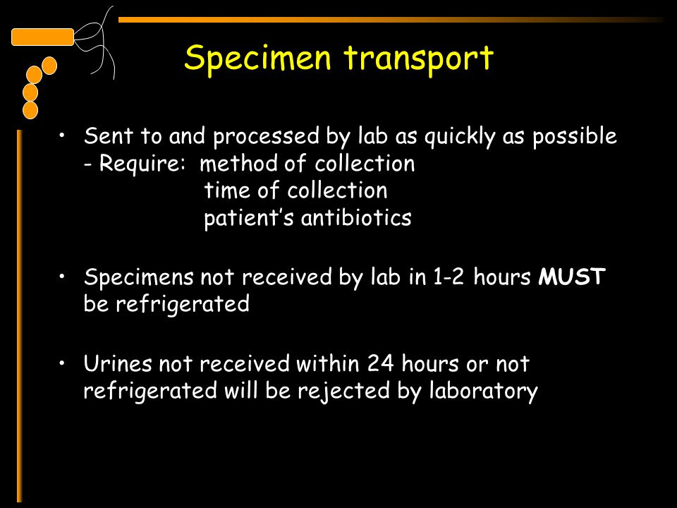 Specimen transport