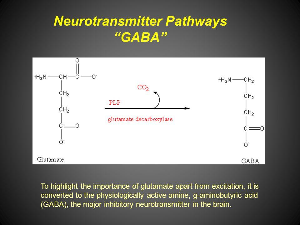 Neurotransmitter Pathways GABA