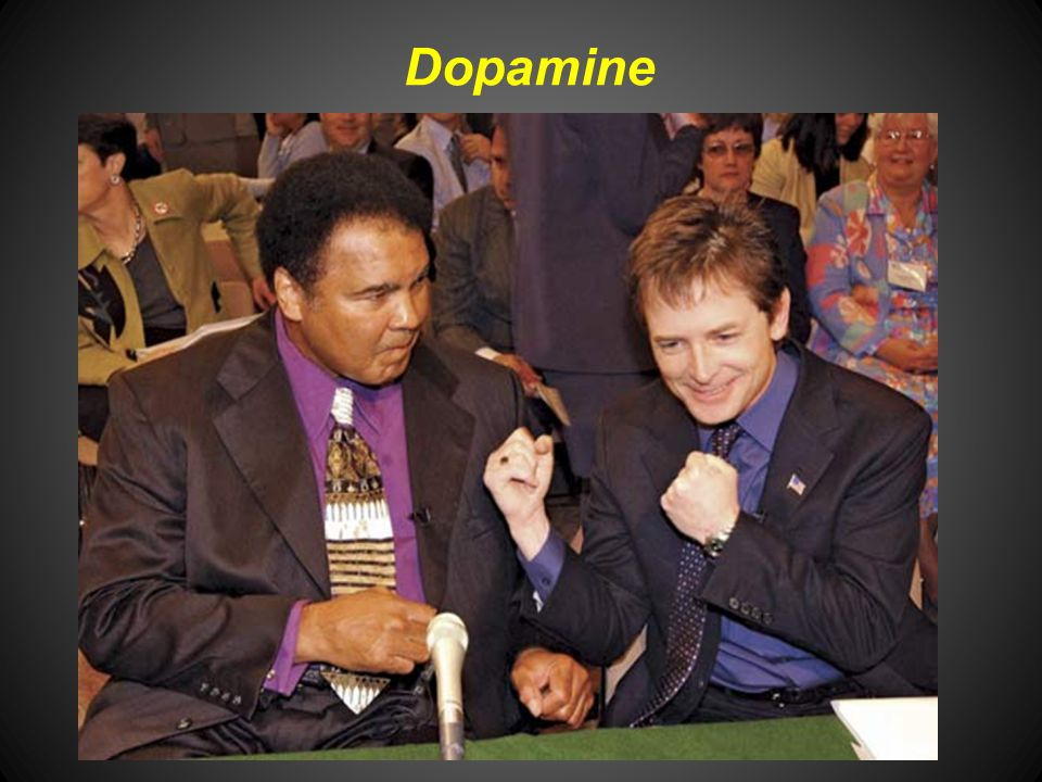 Dopamine Dopamine is a catecholamine precursor for norepinephrine and is found both in the CNS and adrenal medulla wherever norepi is found.