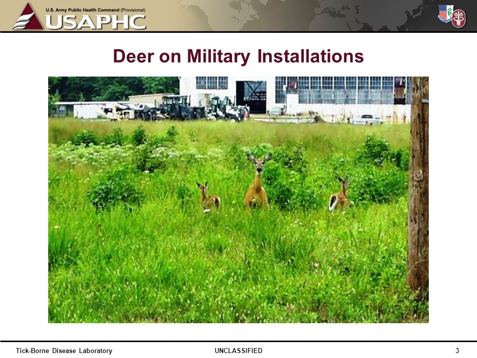 Deer on Military Installations
