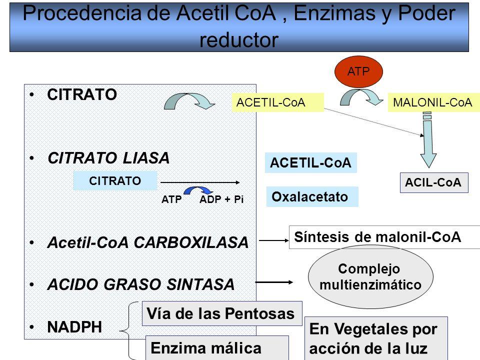 Procedencia de Acetil CoA , Enzimas y Poder reductor