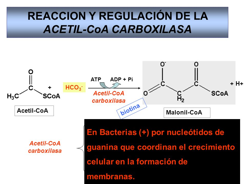 REACCION Y REGULACIÓN DE LA ACETIL-CoA CARBOXILASA