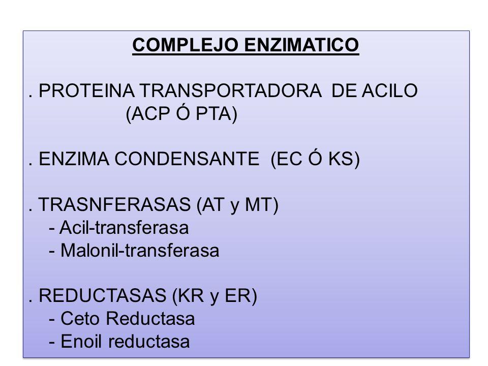 COMPLEJO ENZIMATICO . PROTEINA TRANSPORTADORA DE ACILO (ACP Ó PTA) . ENZIMA CONDENSANTE (EC Ó KS)