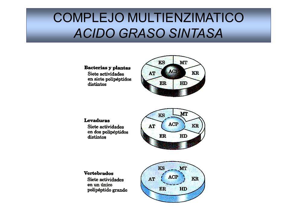 COMPLEJO MULTIENZIMATICO ACIDO GRASO SINTASA