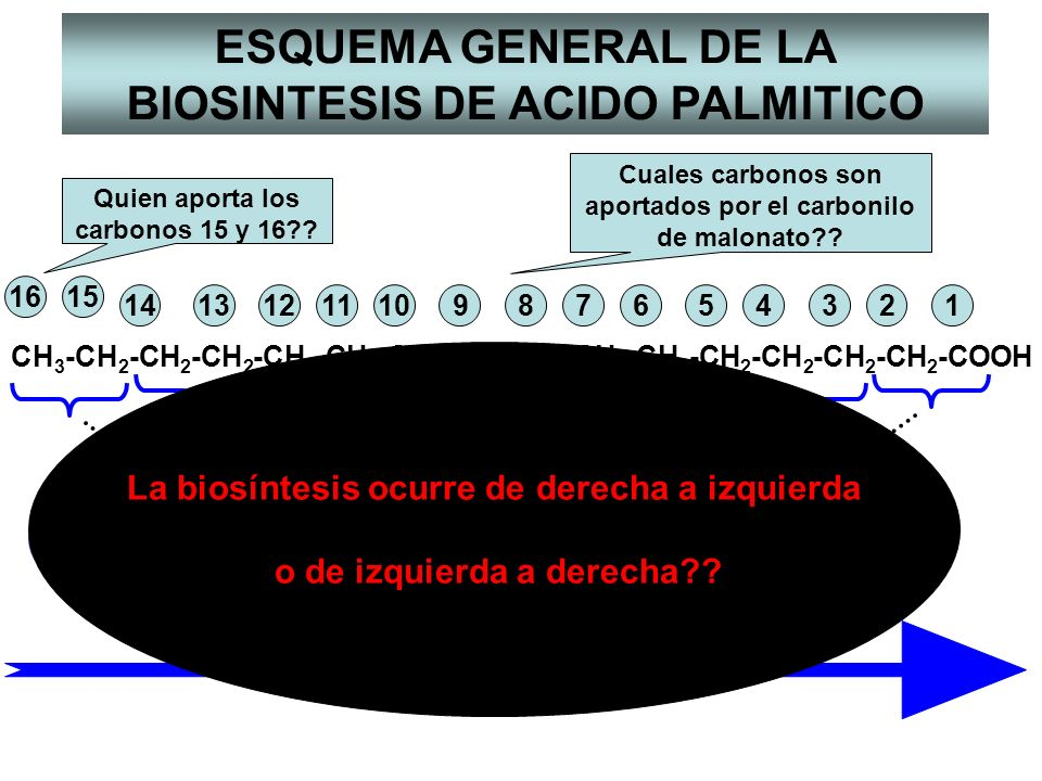 ESQUEMA GENERAL DE LA BIOSINTESIS DE ACIDO PALMITICO