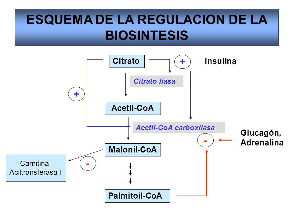 ESQUEMA DE LA REGULACION DE LA BIOSINTESIS