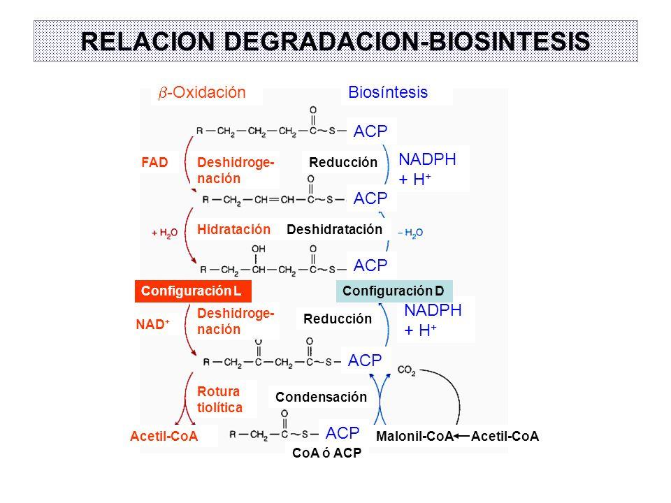 RELACION DEGRADACION-BIOSINTESIS
