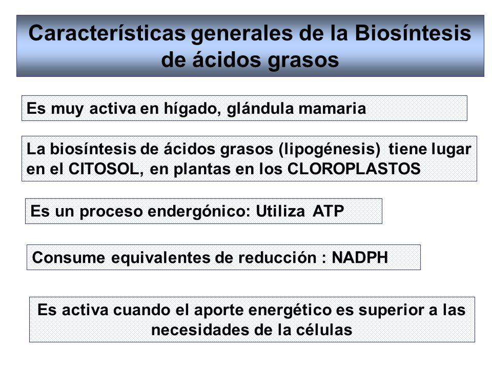 Características generales de la Biosíntesis de ácidos grasos