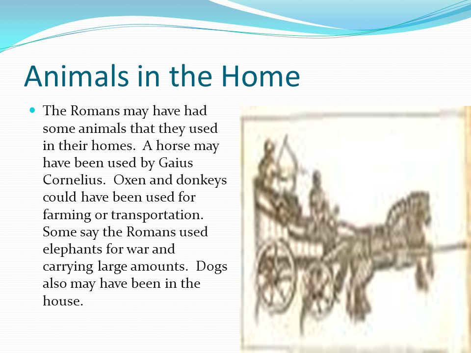 Animals in the Home