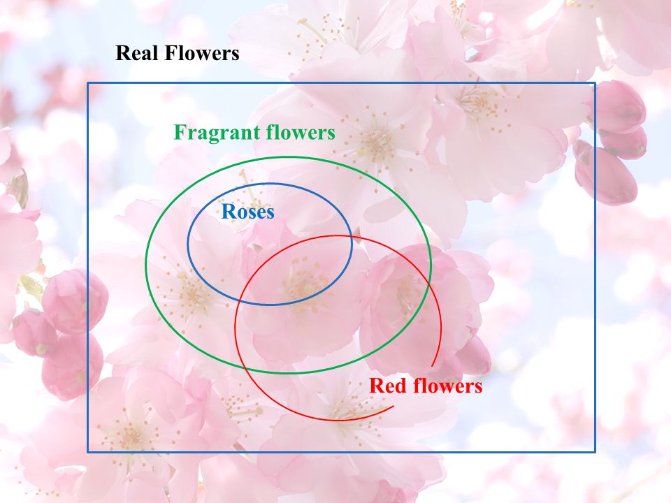 Real Flowers Fragrant flowers Roses Red flowers