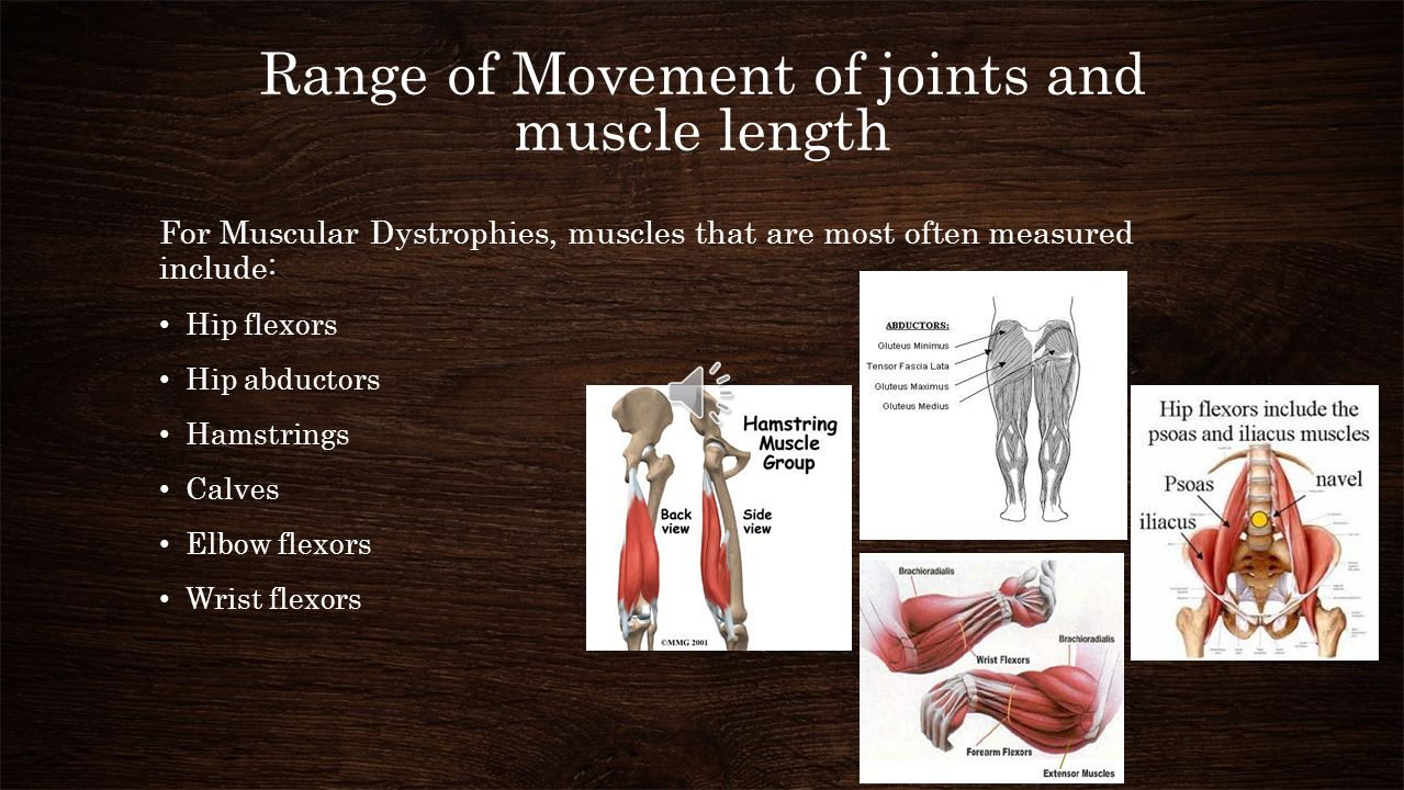 Range of Movement of joints and muscle length