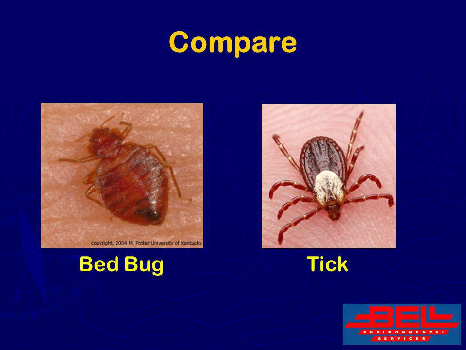 Compare Bed Bug Tick 10