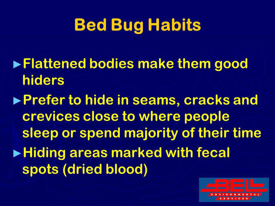 Bed Bug Habits Flattened bodies make them good hiders