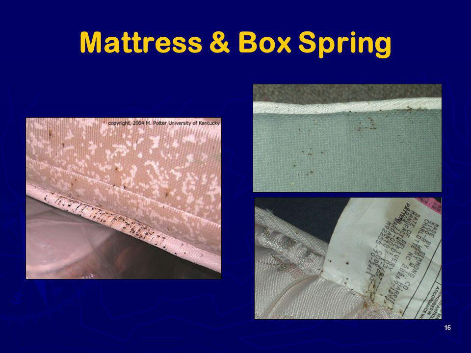 Mattress & Box Spring 16