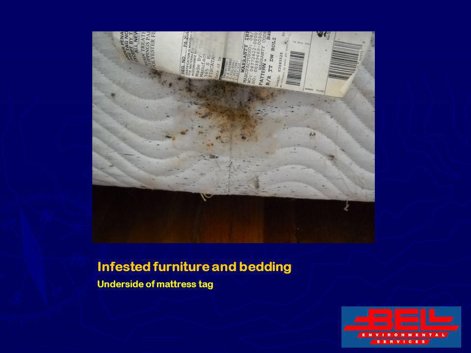 Infested furniture and bedding