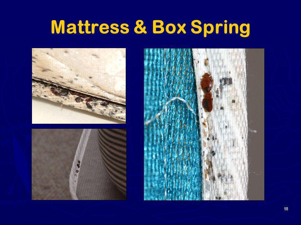 Mattress & Box Spring 18
