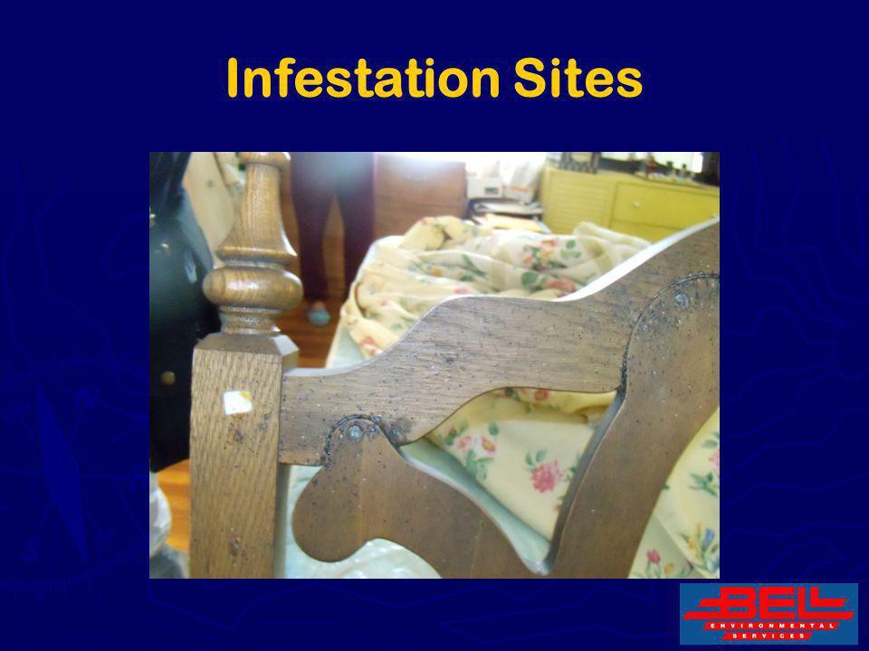 Infestation Sites