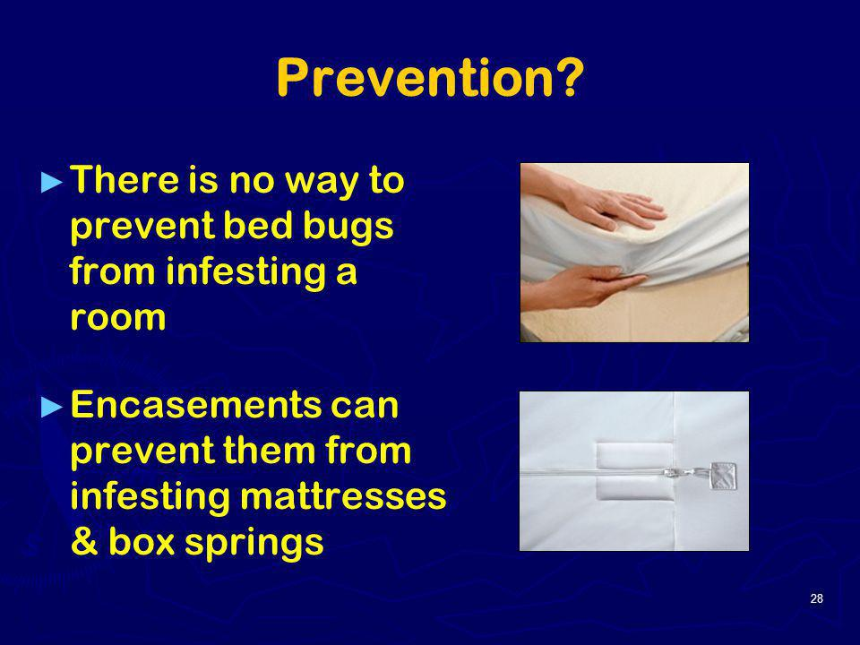 Prevention There is no way to prevent bed bugs from infesting a room
